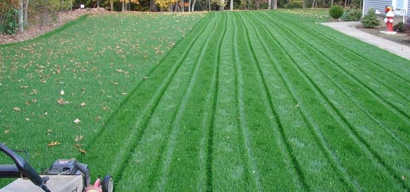 Lawn Fertilizing Oak Creek Franklin Hales Corners Wi